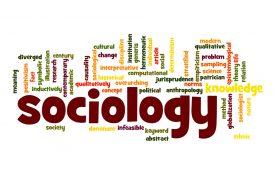 lavori ideali laureati sociologia